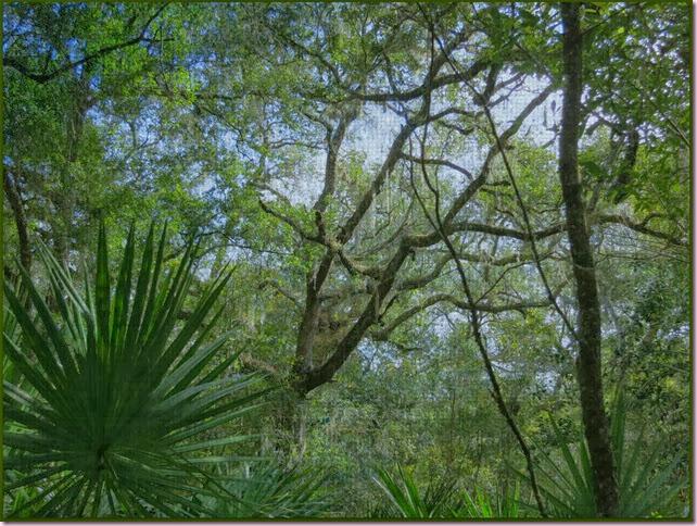 treesIMG_8553