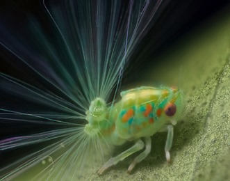 Amazing Pictures of Animals, photo, Nature, exotic, funny, incredibel, Zoo, Leafhopper, Insecta, Alex (4)