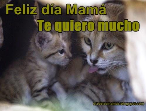 te quiero mama 67