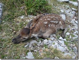 07 Bambi no se mueve