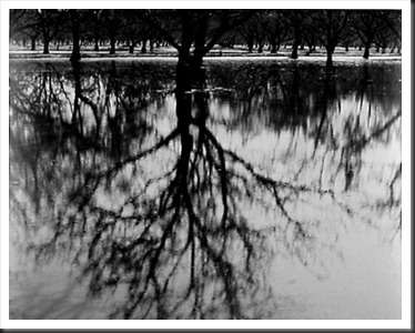 Henry_Gilpin_Trees_Reflections