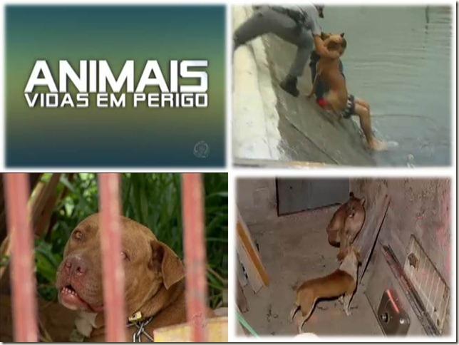 animaisR7_01