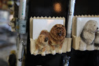 And this fridge magnet that holds a pen and paperit has Chow Chows on it!  Wouldn't GK love that?