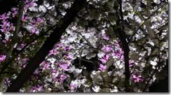 螢幕截圖 2014-06-04 14.51.44