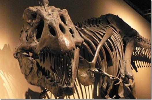 fosilesdinosaurios01