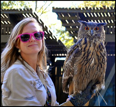 05h5 - Flight Demo - Euroasian Owl