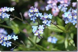 12.04.23 garden 010