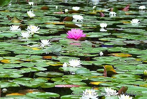 Glória Ishizaka - flores 80