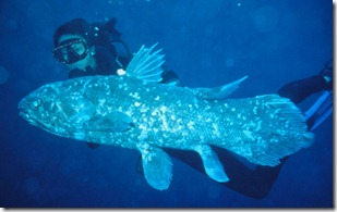 indonesia_coelacanth_2