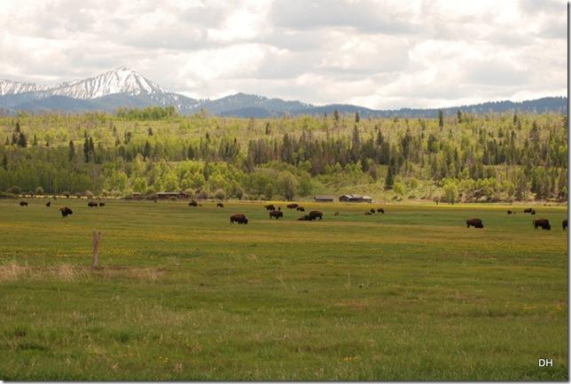 06-07-13 A Elk Ranch Flats (25)