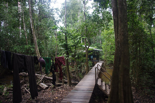 Suspended walkways leading to the sleeping huts at Uncle Tan's camp.