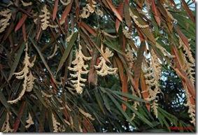 bamboo_flowers_in_mizoram_ShahanazKimi