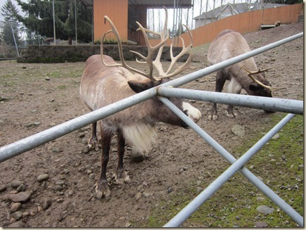 12-23 Reindeer Fesitival 032