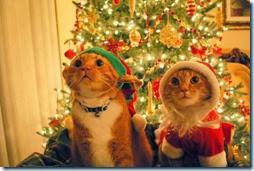 animales navidad (1)