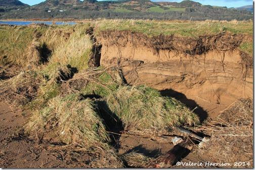 36-damaged-dunes