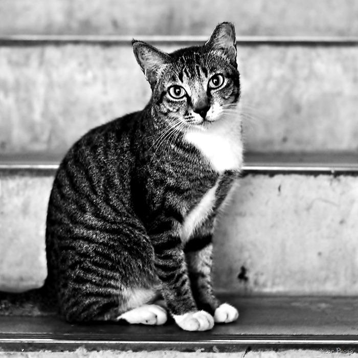 19 - Cat