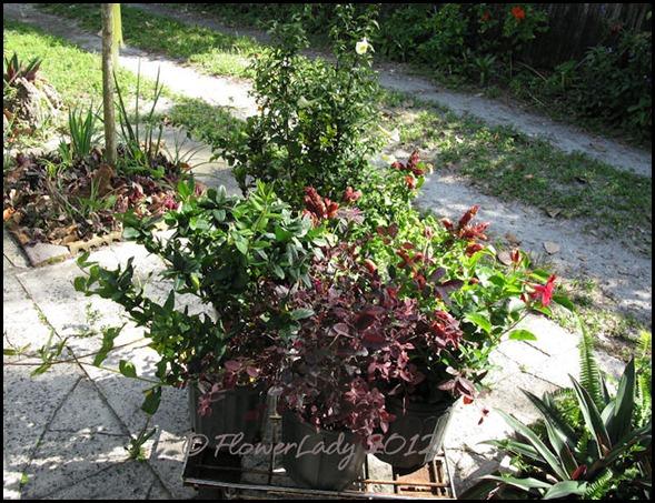 03-20-six-plants-2