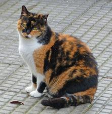 xmas_cat_07