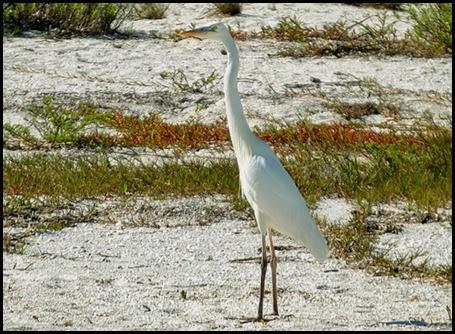 02h - Blue Heron White Version