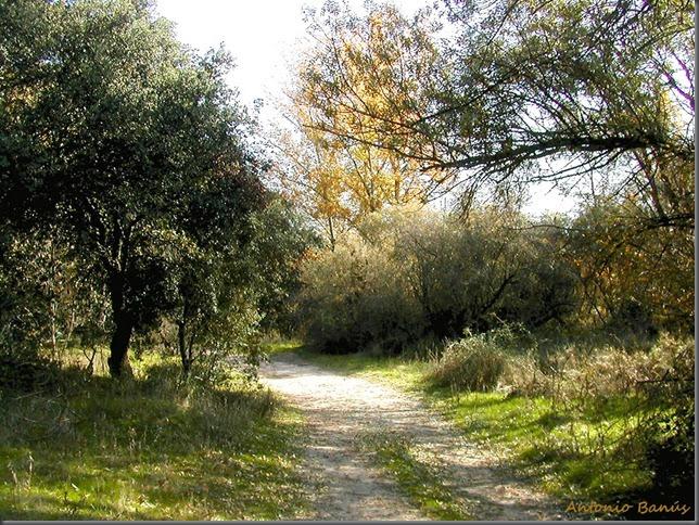 10 Camino de otoño DSCN6726X1
