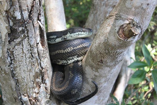 Snake small
