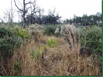 Pat's Island Trail 098
