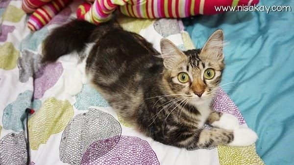 Kucing Nisakay 2
