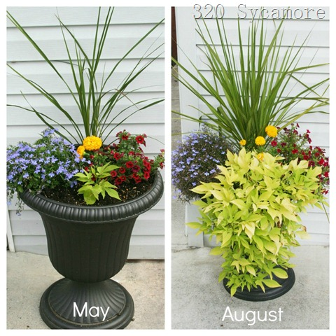 flower pot before after