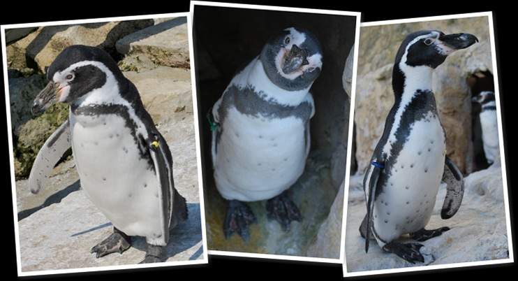 View penguinmoult2