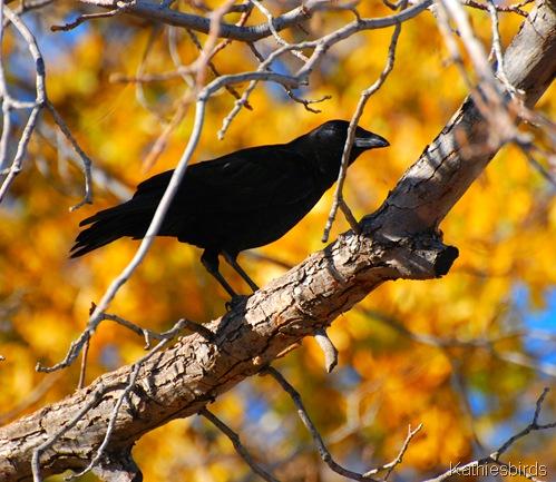 2. crow-kab
