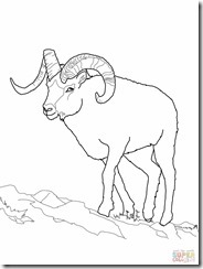 dall-sheep-coloring-page