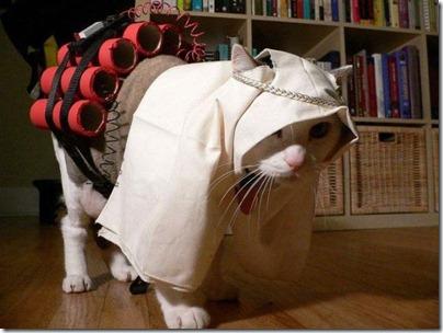 kitty bomber