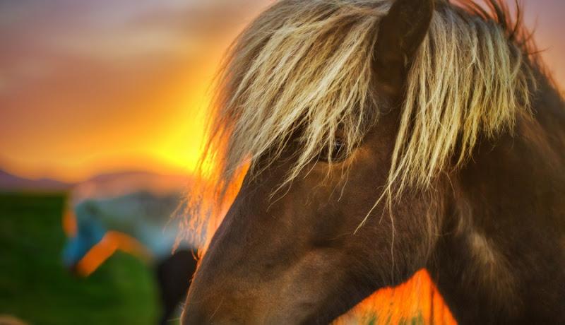 The Flaxen Horse
