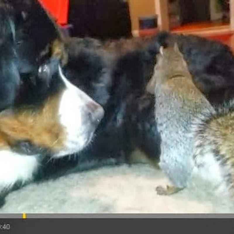 Ο σκίουρος και τα βελανίδια του