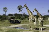 Jao Camp (Botswana), Wilderness Safaris