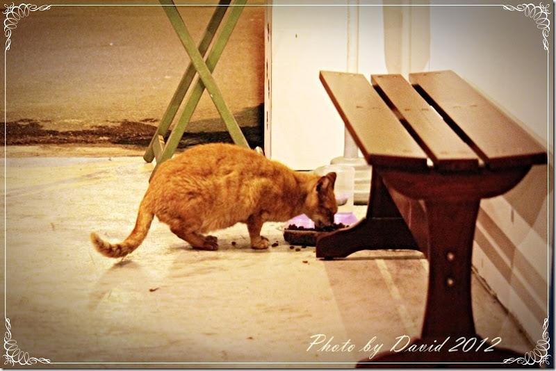cat114