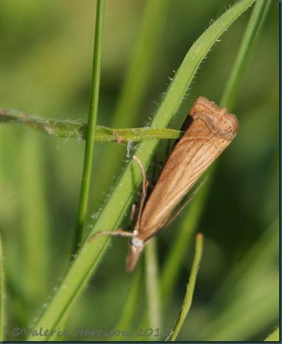 garden-grass-veneer