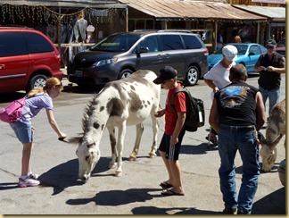 2012-09-27 -2- AZ, Oatman -043