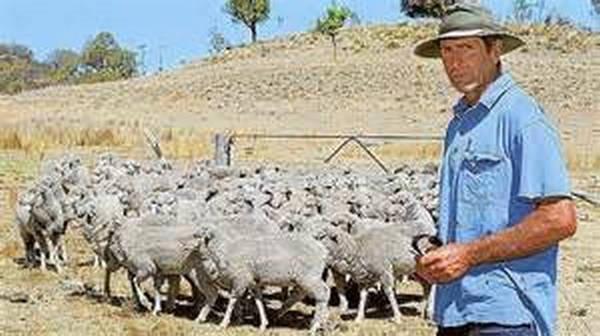 """10- Ovelhas """"drogadas"""" cometem suicídio na Austrália"""