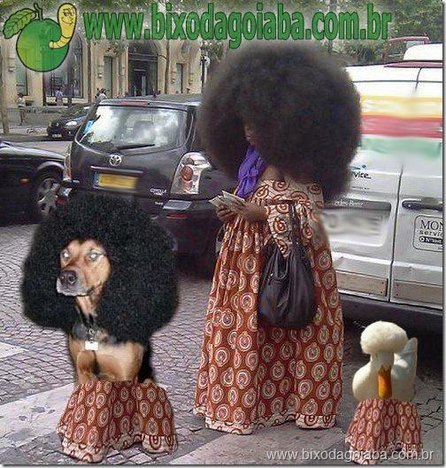 cabelos-black-power