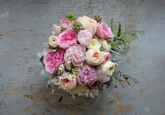 1001741_371792179616882_1430923316_n sachi rose