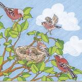 pájaros 005.jpg