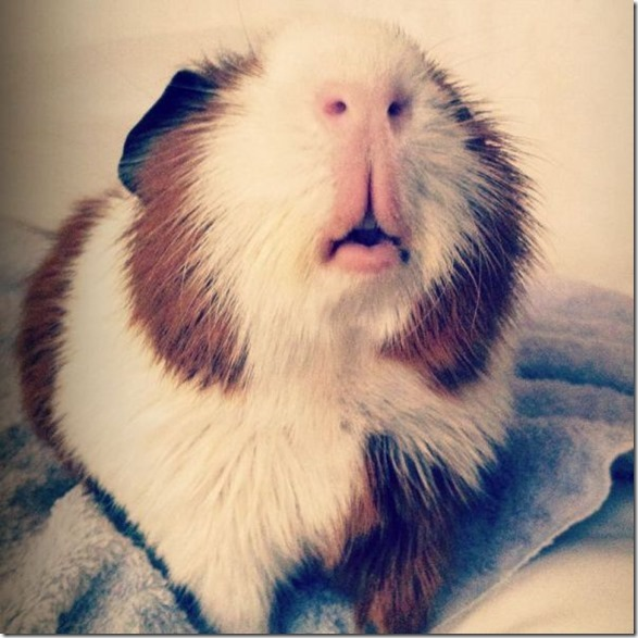 funny-animals-cute-12
