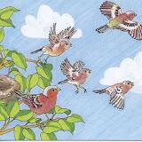 pájaros 006.jpg