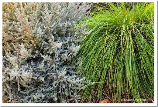 131124_UCD_Arboretum_AustralianCollection_100