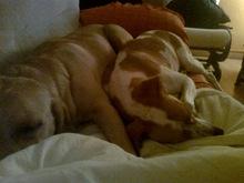 Tita y Duna en el sofá (3)