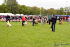 20100513-Bullmastiff-Clubmatch_31019.jpg