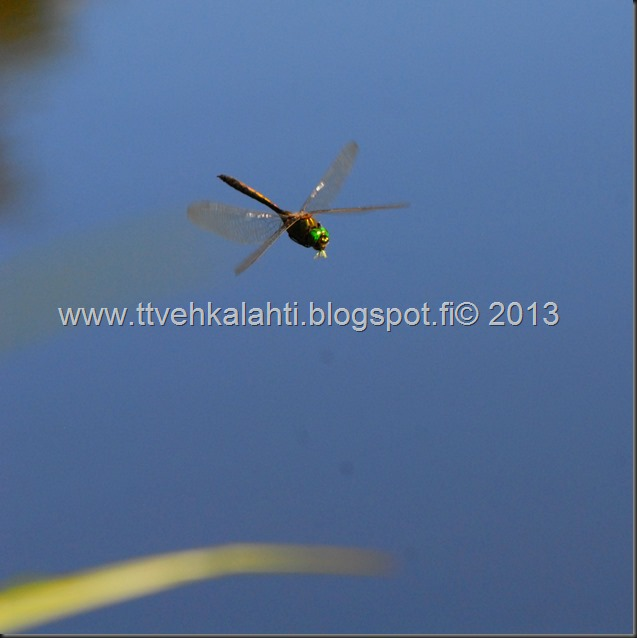 perhonen  sudenkorentoja 100