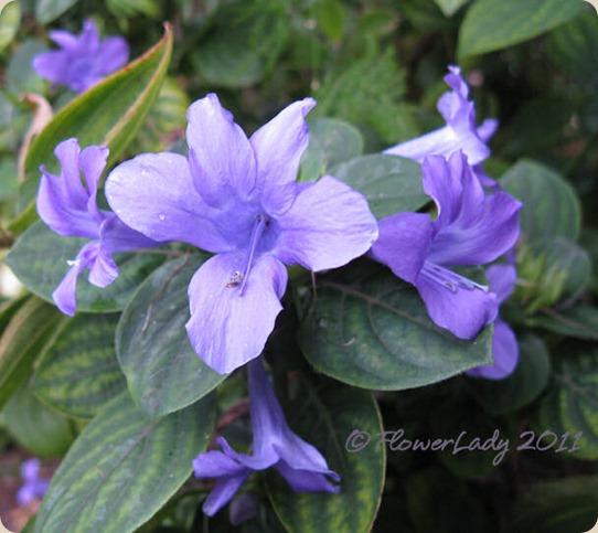 11-09-phil-violet