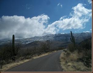 Saguaro03